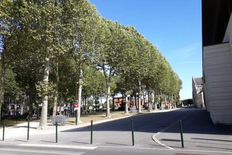 les platanes de la place André Thôme
